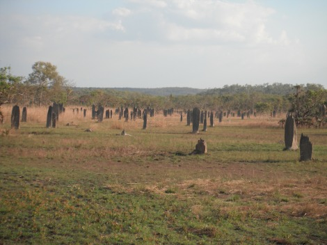 termite mounds, travel, adventure, vacation, Litchfield, Kakadu, Northern Territory