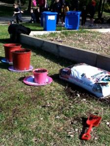 daffodil, gardening, planting, spring, australia, Adelaide
