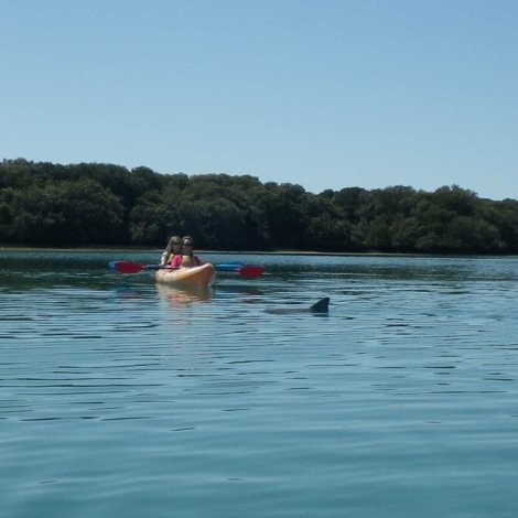dolphins, port river, adelaide, kayak, suntan, lake