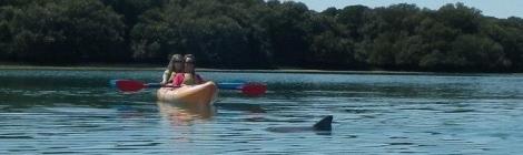 dolphins, port river, adelaide, kayak, suntan, lake
