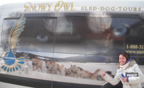 Snowy Owl Sled Dog Tours, dogsledding, husky, dogs, canmore