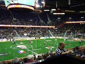 lacrosse, calgary roughnecks, washington stealth, howie the honey badger, high scoring, rough play, cheering fans, fast paced play, goal, score, announcer, go 'necks go, live sports, sporting event, fun, excitement, commaraderie, large crowds, spectators,